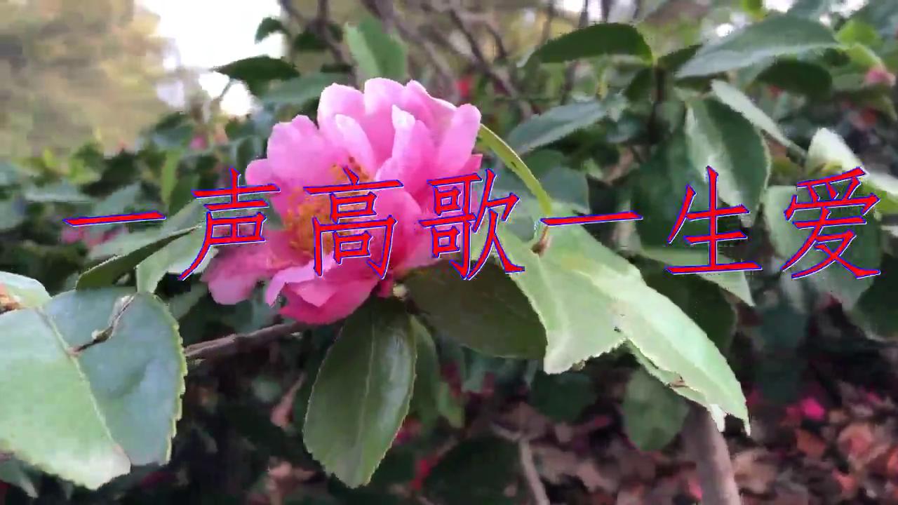 分享刘向圆的经典歌曲《一声高歌一生爱》,声音清澈如此深情