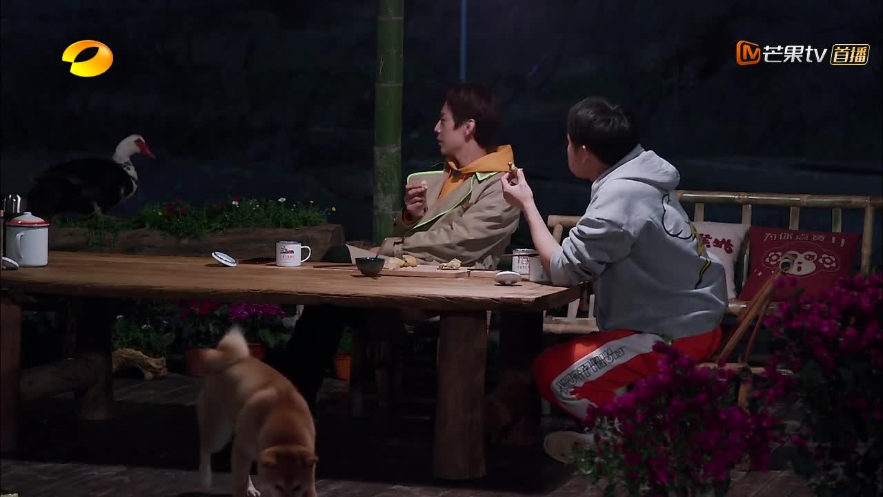 向往的生活2:黄磊竟想把彩灯做成标本,然后炖了吃肉,太坏了!