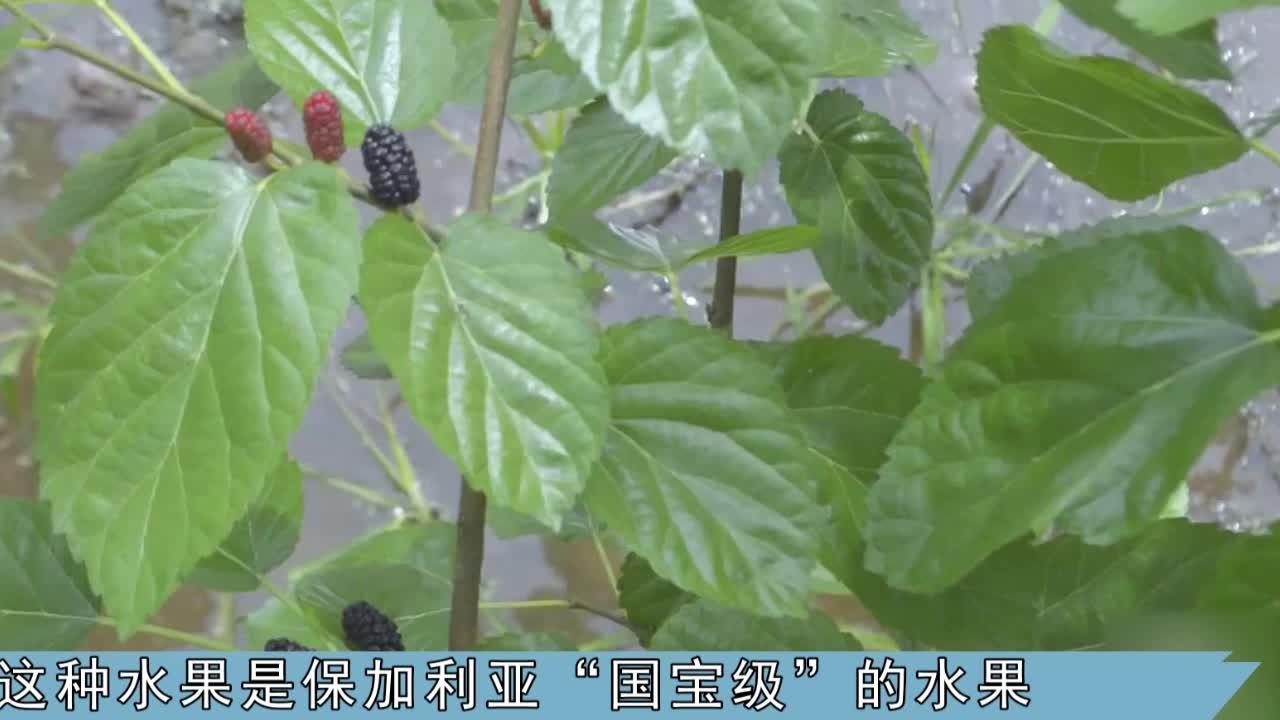 """被称为""""黑钻石""""的水果,50元一斤,鲜果很难买,你吃过吗"""