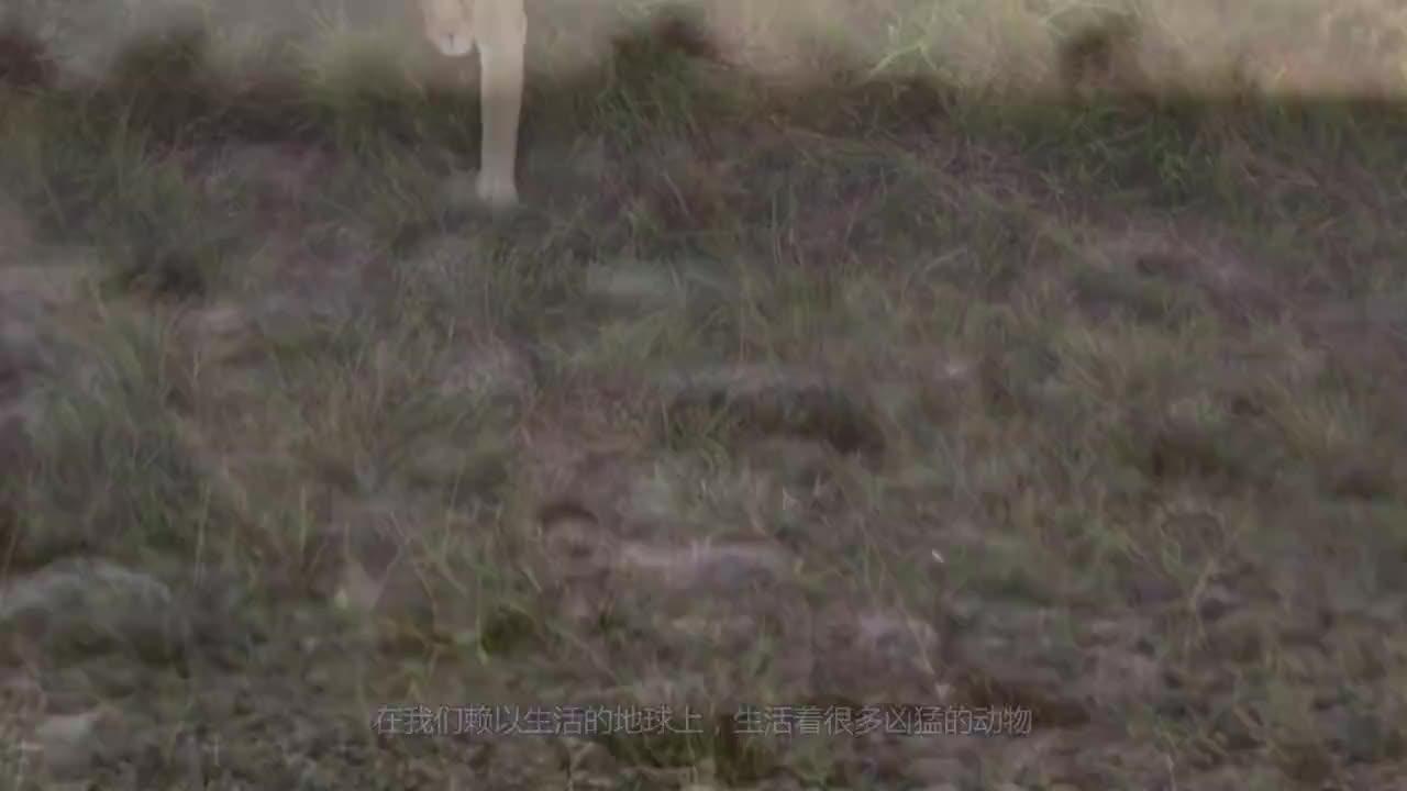 河南农民发现1.5米巨鸟,抓走村里大狗后,专家一眼查明真相