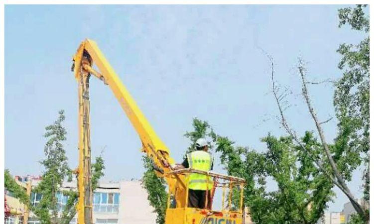 单县园林绿化服务中心:加强夏季苗木修剪工作