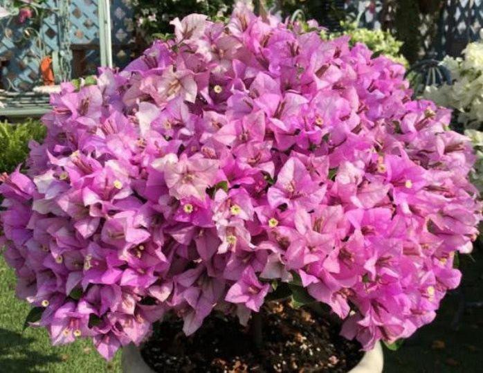 5种花是懒人的最爱,有阳光就爆盆,一开就是300多天