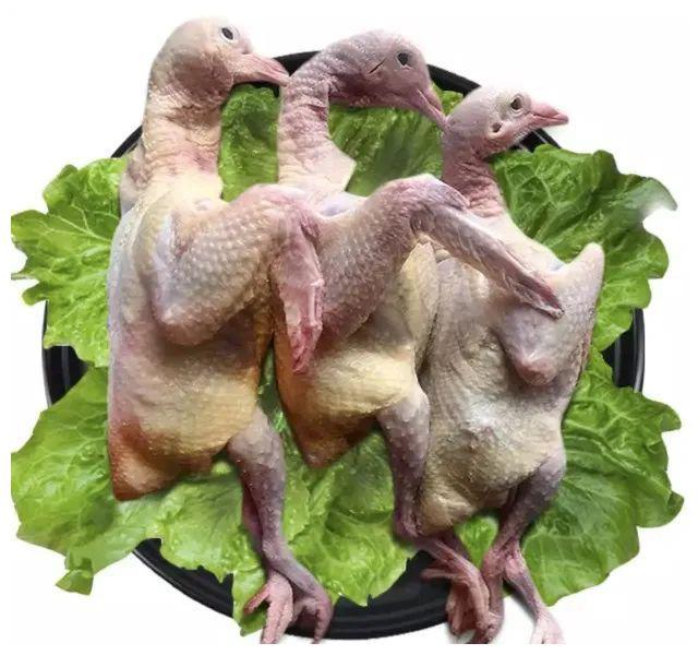 皖北生态乳鸽3只仅售99.8元!生态散养、新鲜宰杀!