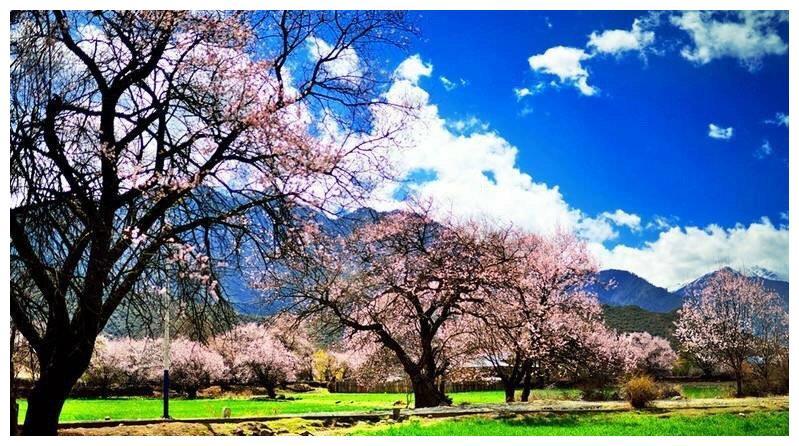 现实版三生三世十里桃花,林芝桃花节!中国最美的春天就在这?