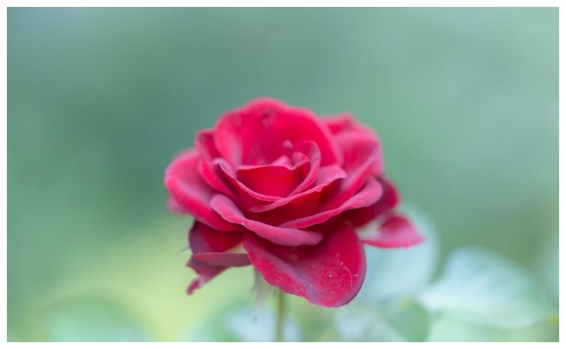 生肖马:下半年紫气东来,财运上上签,桃花朵朵开,好事成双