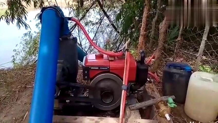 实拍洋马发动机带动水泵抽水浇田,真是脑洞大开