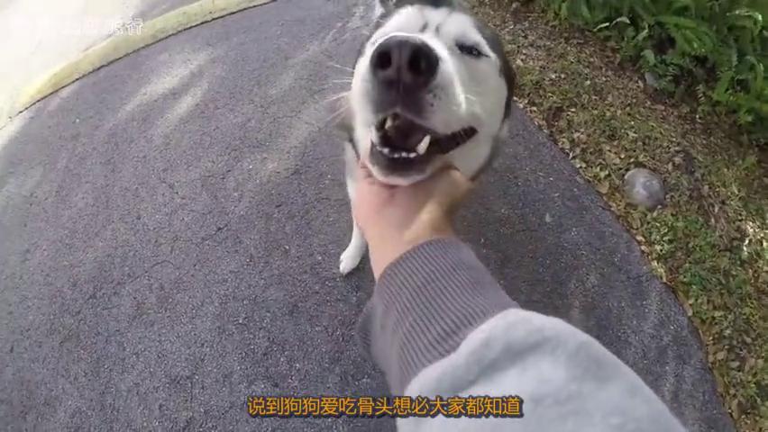 狗狗最爱吃骨头,如果突然出现了一群骷髅架,它会怎么样?