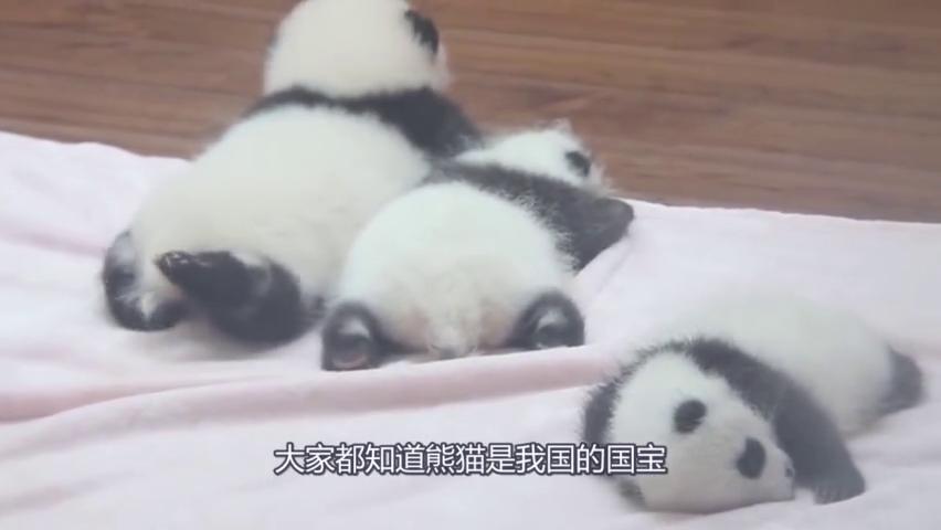 同样都是国宝,大熊猫被当个宝贝供起来,它却被端上餐桌
