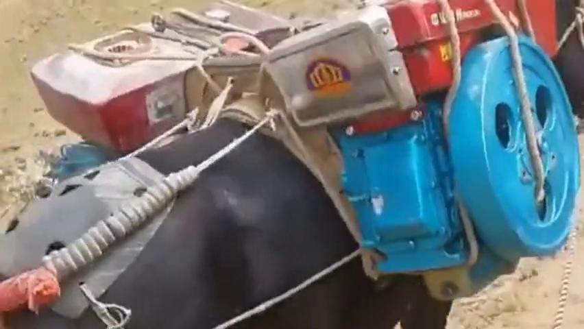 老板买了小型柴油机和小型打砂机,路不通,只能靠毛驴驮回去了!