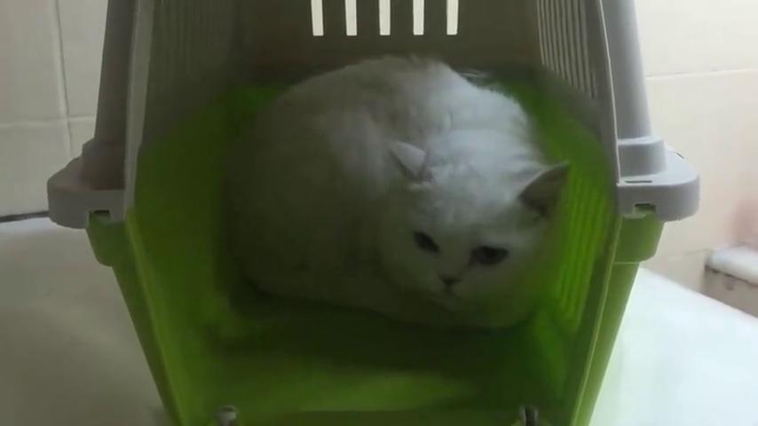 一脸蒙圈的白猫:这玩意一过去,我就感觉凉飕飕的