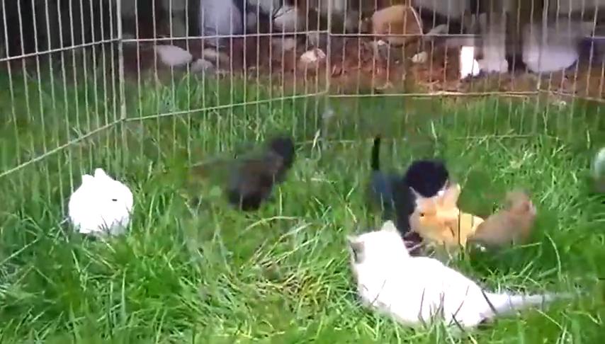 国外网民实验:把猫放在兔子窝里的结果