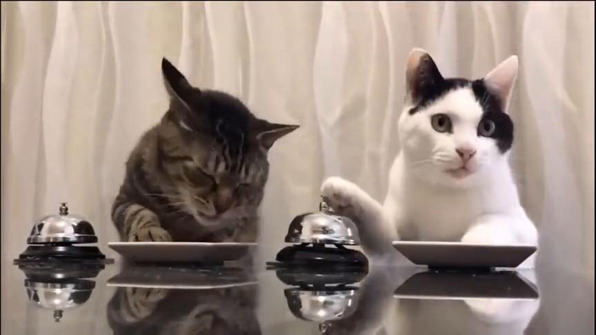 现在猫咪吃饭都是成双成对的,真是羡煞单身狗们啊