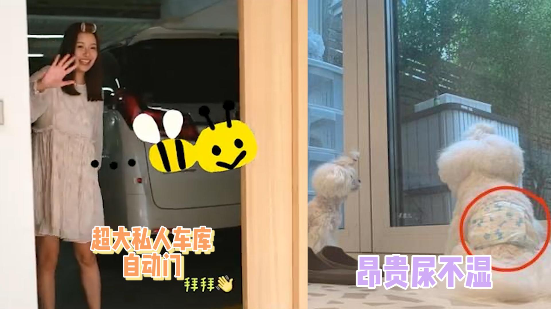 张子萱晒日常意外曝光豪宅内景,私人车库超大,宠物狗纸尿裤昂贵