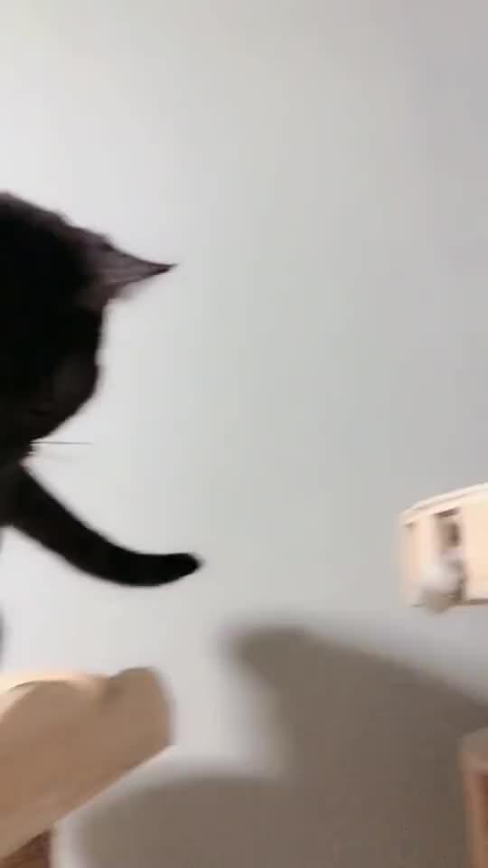 萌宠:看这小猫咪的眼神,它是在嘲笑我的智商吗?