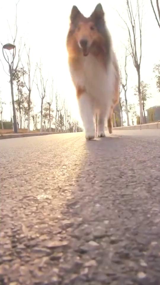 泰勒提醒您在外遛狗,远离马路