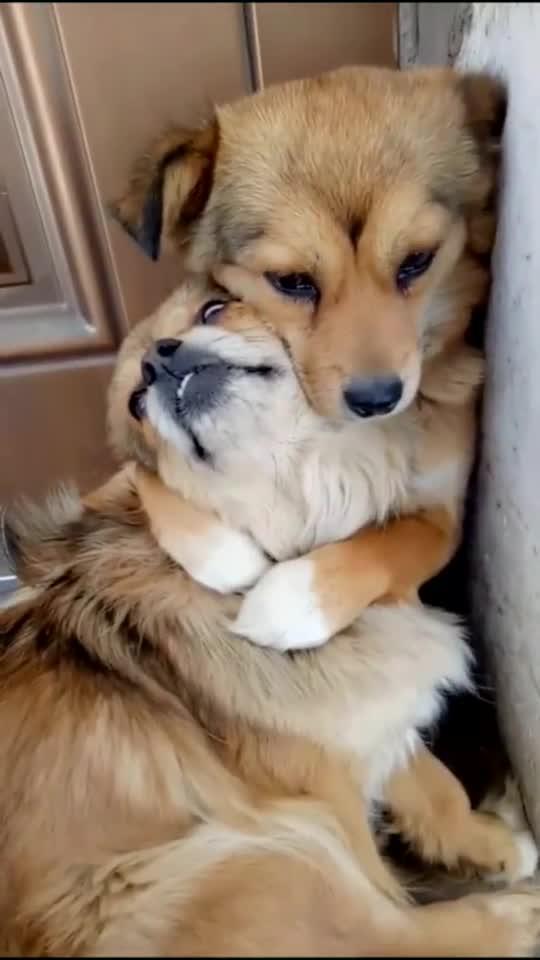 狗妈得了脑炎,为防止它传染给孩子想把它送走,小狗的举动亮了
