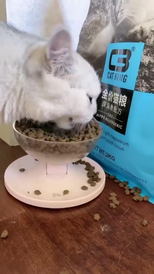 猫咪吃猫粮,惊呆铲屎官,这副样子是把你饿了多久了?