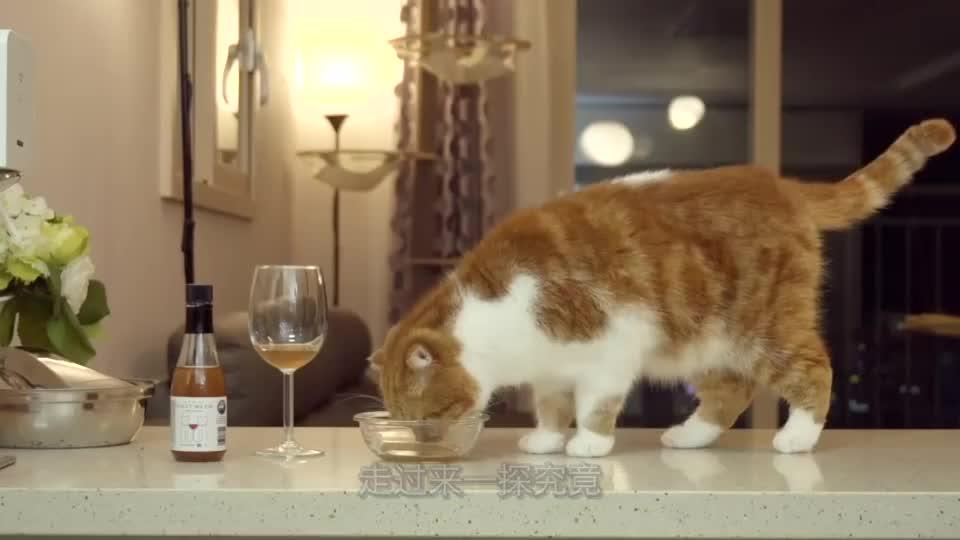 主人给猫咪喝酒,不料一口下去猫咪就醉了,猫咪:有点上头!