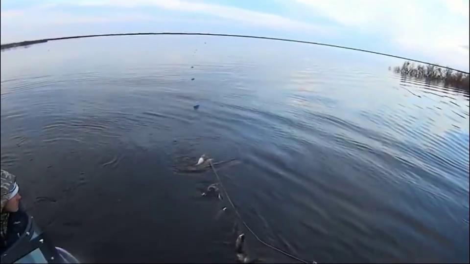 野河下挂网捕鱼,大鱼成串一条接一条这才应该叫爆网