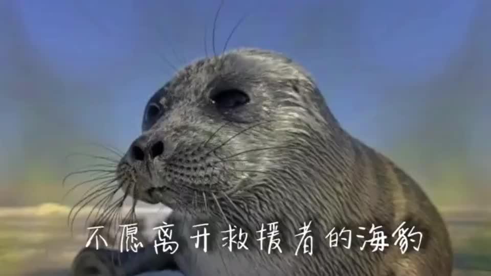 被救助的海豹