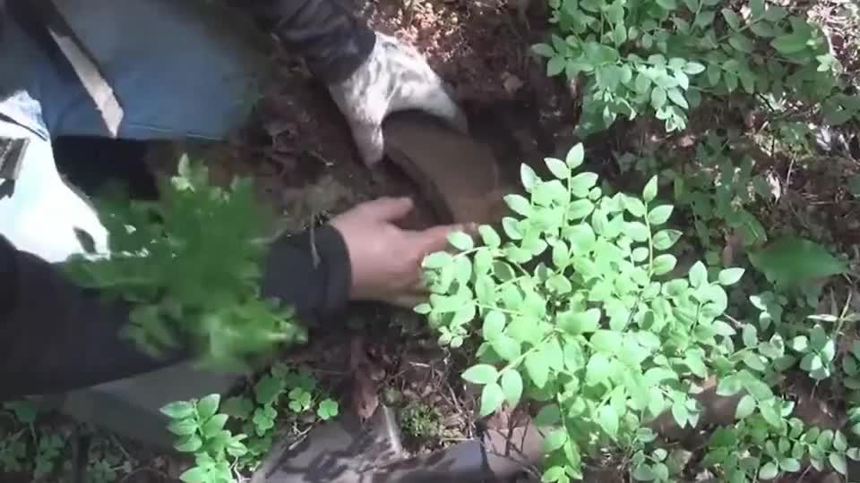 探索二战遗址全靠金属探测器,找到了步枪弹匣,还有手榴弹