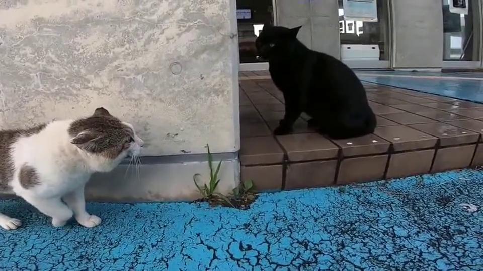 黑猫想到屋檐下避雨,结果猫咪不肯,差点打起来