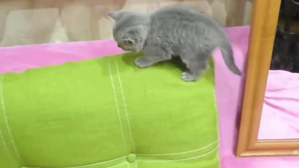 小奶猫在玩主人臭脚丫,网友:没有闻到不一样的味道吗
