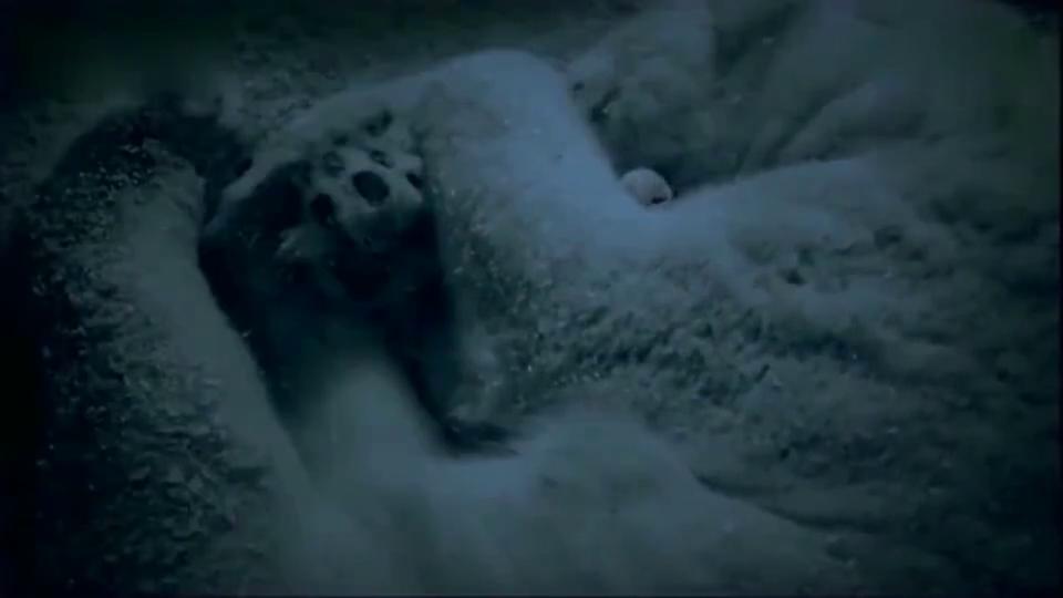 北极熊:刚出生的北极熊宝宝太呆萌了