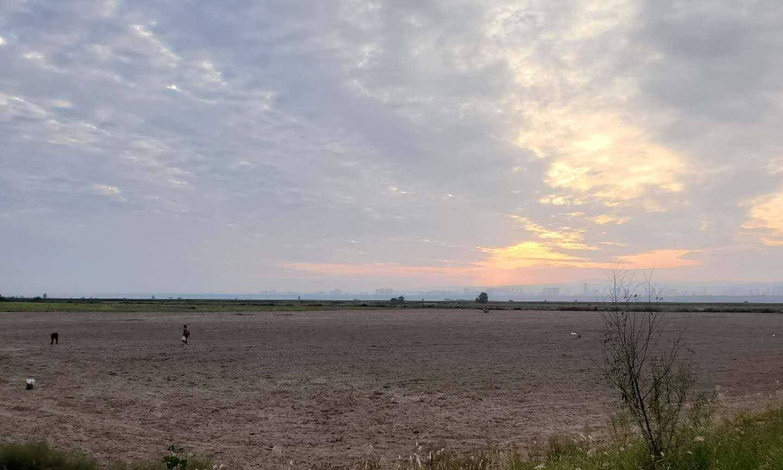 河津黄河滩 绿野碧连天 万物吐芳华 一览天地宽