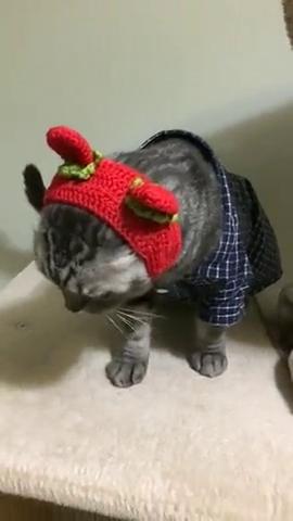 猫咪:我怎么这么好看,谁敢跟我比