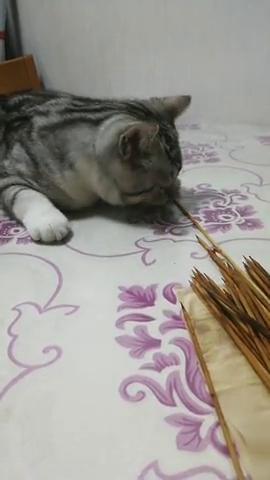 猫咪:铲屎官你太狠了,一根都不留