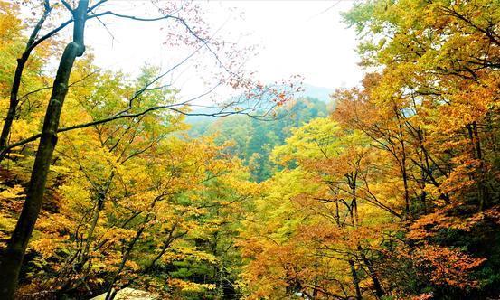 四川又一景区走红,红叶节当天吸引上万名游客,距成都仅5小时