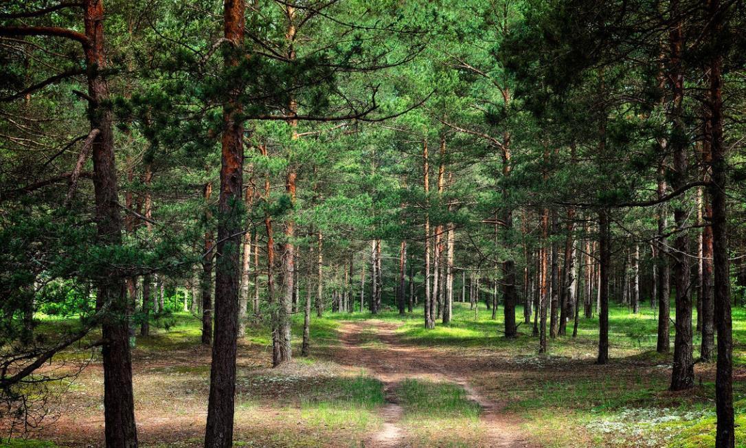 杉木优良种植造林技术,提高造林成效和扩大木材产量,值得一看