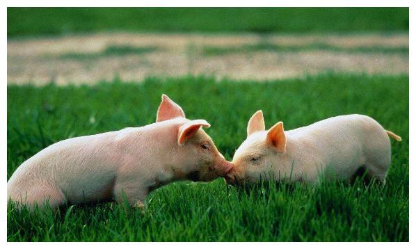 猪猪猪猪猪猪:11月底会有一个的大好事件,说什么都是天意