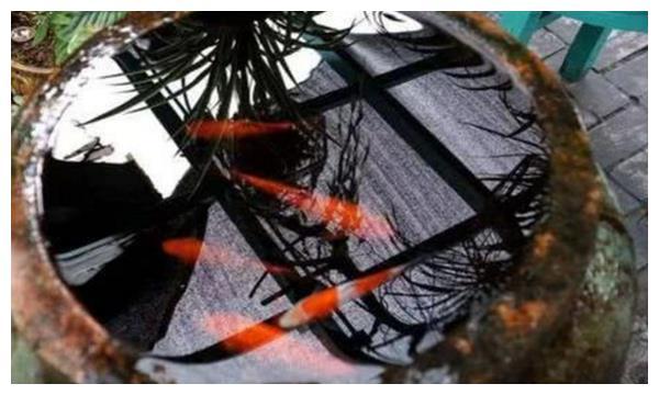 水缸里无人喂养的鱼十年未死,不仅如此,还能净化水质!