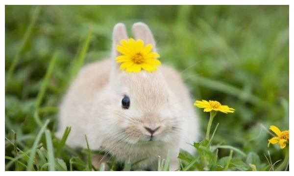 """生肖兔""""如果在这两个季节出生,命好到连老天爷都嫉妒"""
