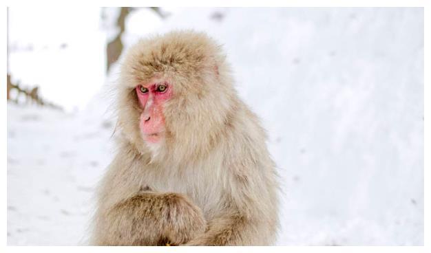 再熬9天,属猴人一辈子最大的贵人来找你了,2021年开始变金猴
