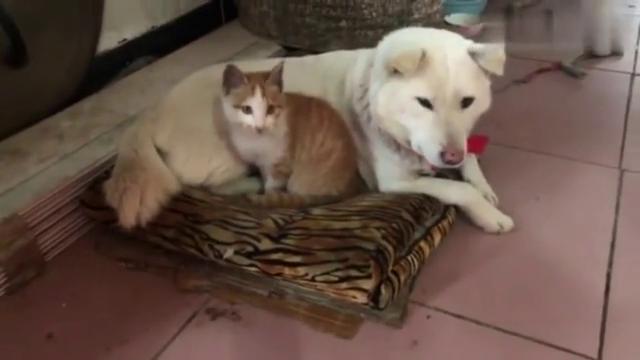 难得看到这么和谐的一幕,愿天下猫狗和平共处!