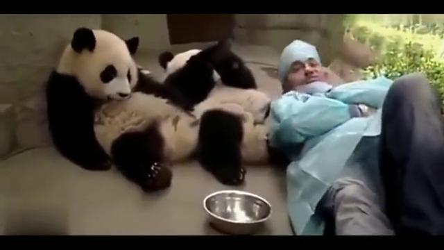 熊猫:放肆,本大爷的大腿是你想躺就躺的,一记熊家拳就打了过去