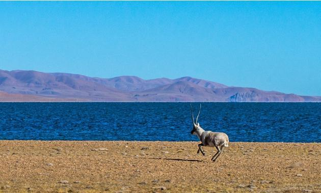 西藏面积最大的三座城市:那曲、阿里和日喀则,哪座城市更有前途