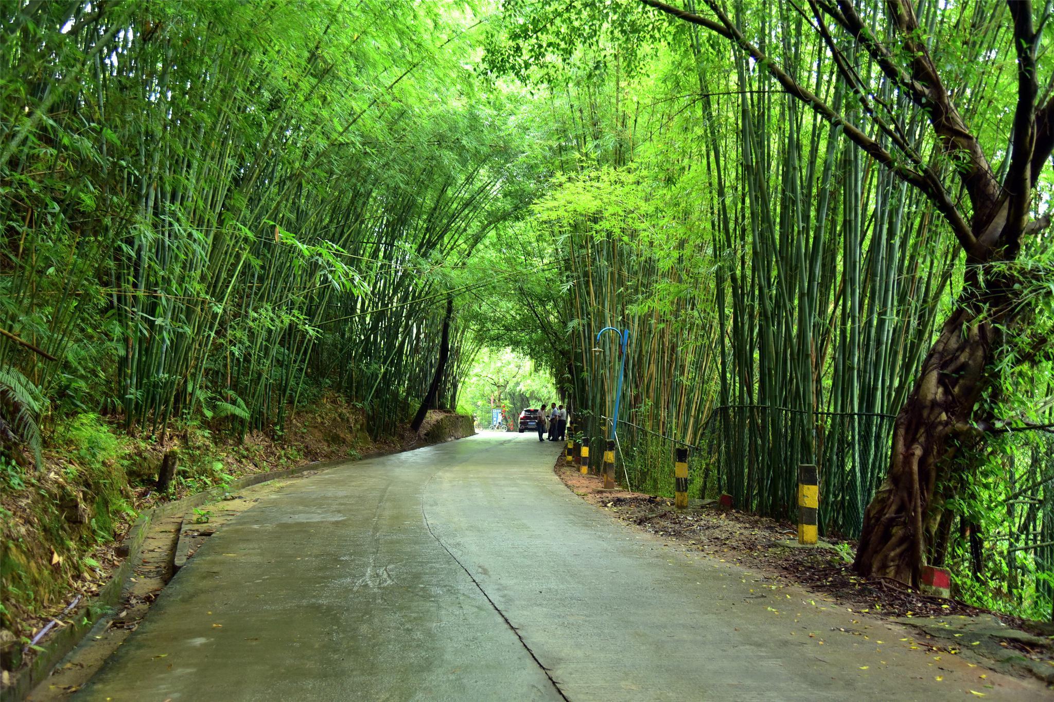 肇庆市广宁县长寿老人多,75岁还去砍竹子赚钱称