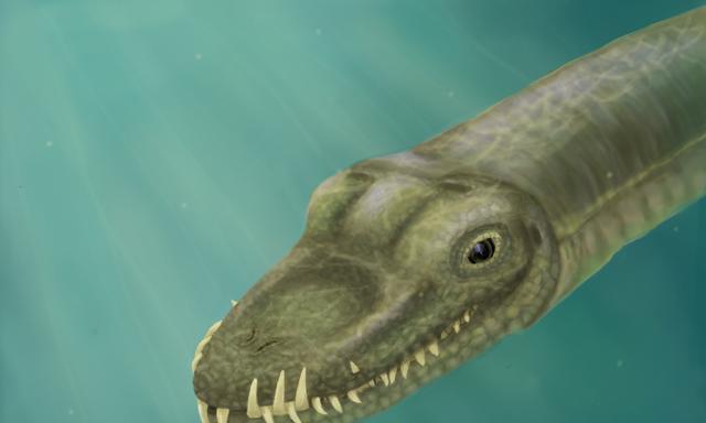 """""""长脖怪龙""""身份确定,科学家:脖子占身体一半,长颈龙的一种"""