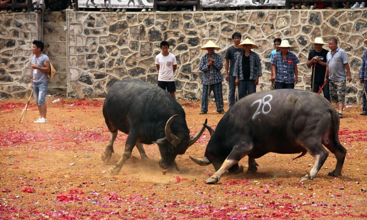 """2头公牛在院里""""决斗"""",人们拿着木棍劝架,差点半条命都搭进去"""