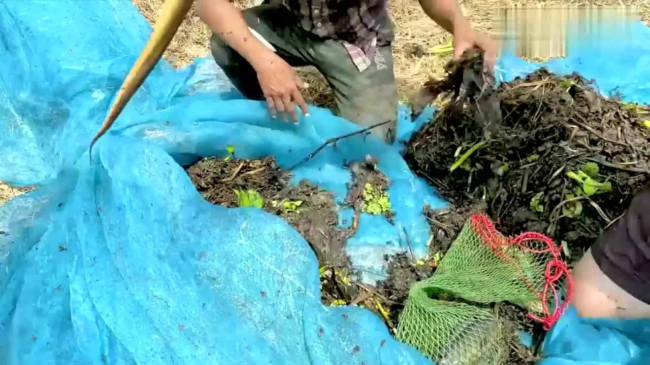 这捕鱼工程够大了用渔网把一片水草都拉起来都抓到什么了