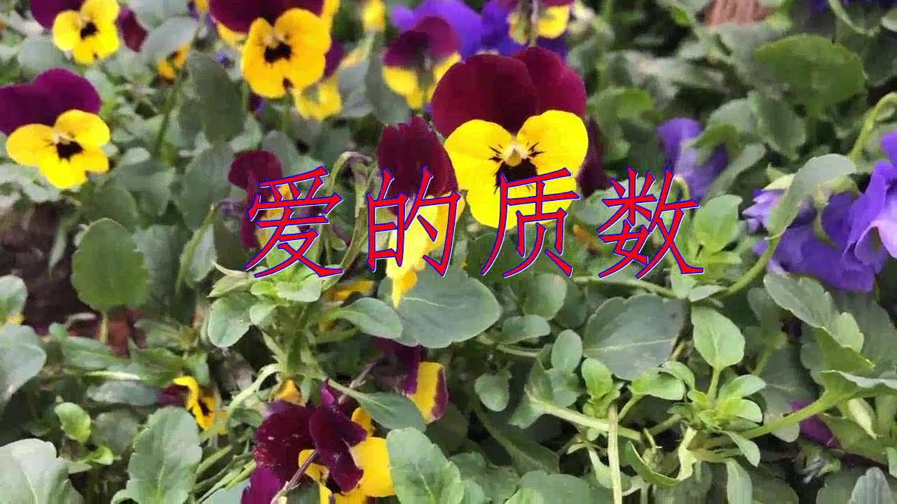 赵鑫的一首《爱的质数》,歌声淳朴,歌声甜美