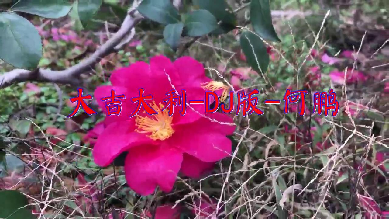 分享一首《大吉大利-DJ版-何鹏》,俏皮美妙,值得倾听