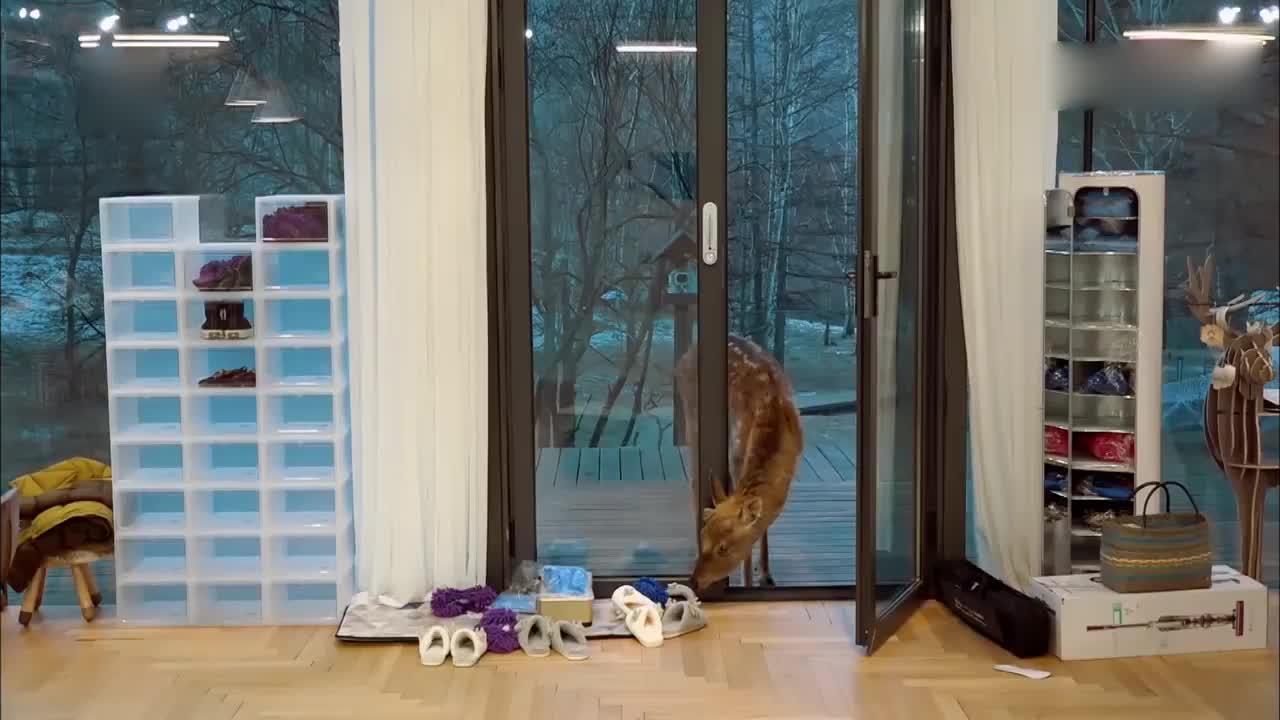 亲爱的客栈:小鹿在房里偷吃,维嘉化身饲养员,这也太暖了吧!