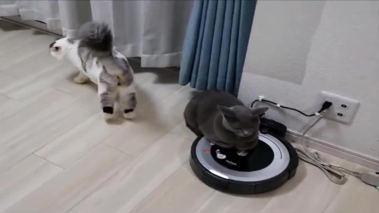 猫咪霸占扫地机器人,当机器人动起来的瞬间,笑出眼泪