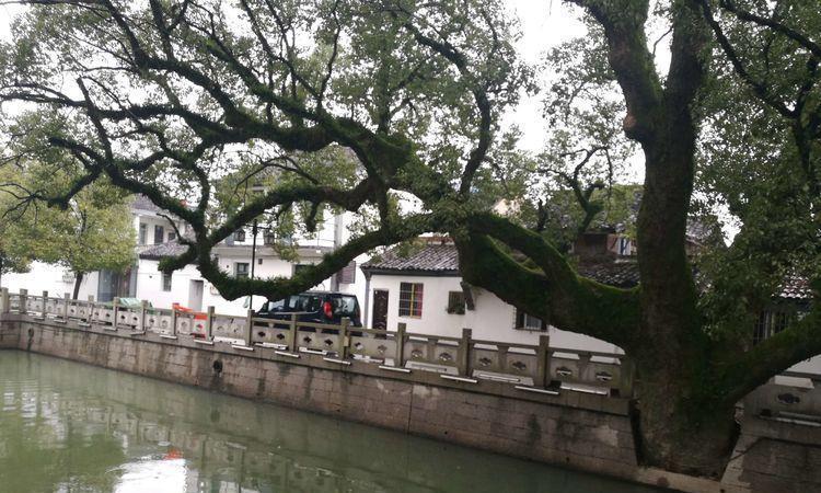 """宁波又一古镇走红,有着""""小宁波""""的称号,多为黑瓦青砖木房子"""