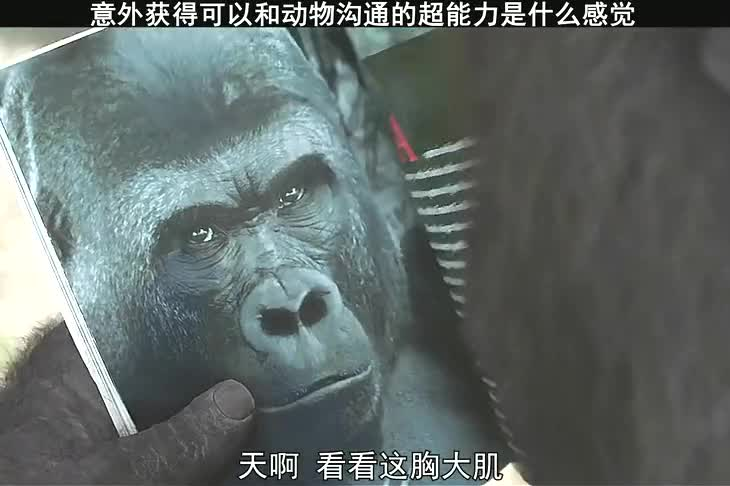 影视-小伙意外获得超能力,可以和动物沟通,想想应该挺好玩的